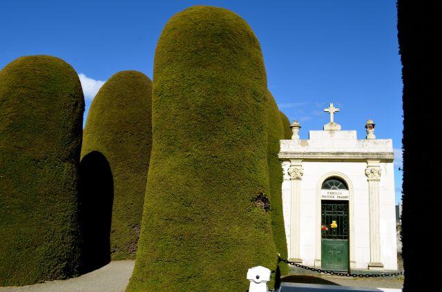Cemetery Punta Arenas cipress