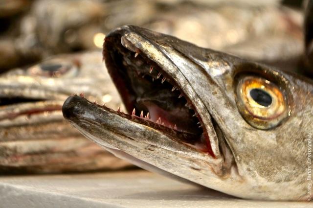 Dramatic fish