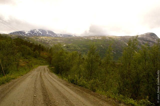 Roadside ecosystems