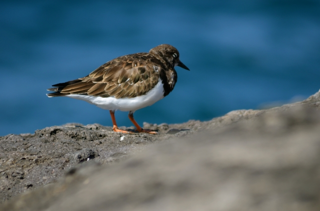Rocking bird