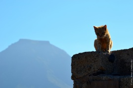 Mountain and cat