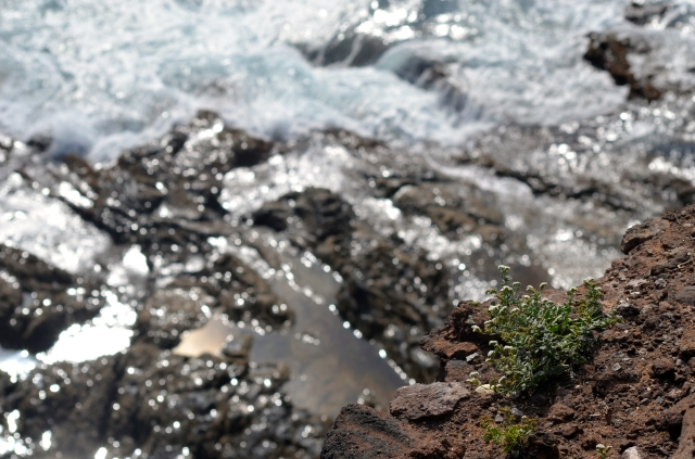 Plants surviving on the rocks