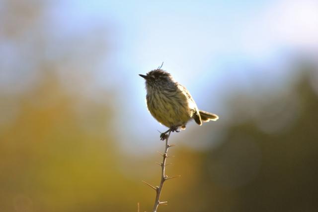 Birdie2