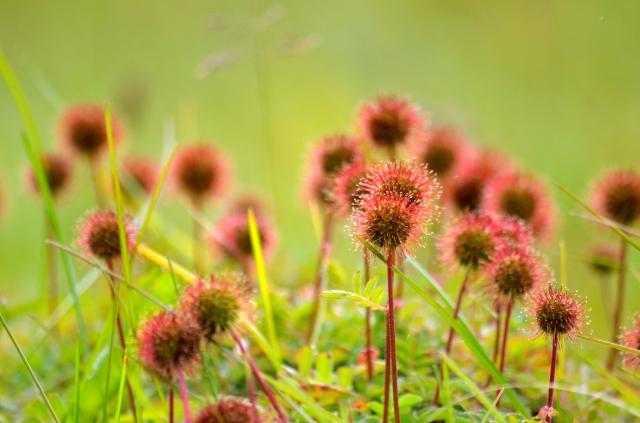 Sticky plants2