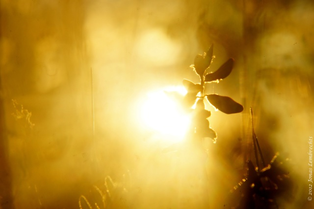 Midsummernight sun in Lapland