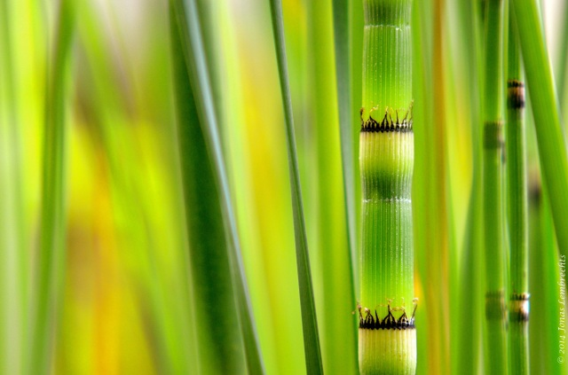 The beautiful detailed view of horsetail
