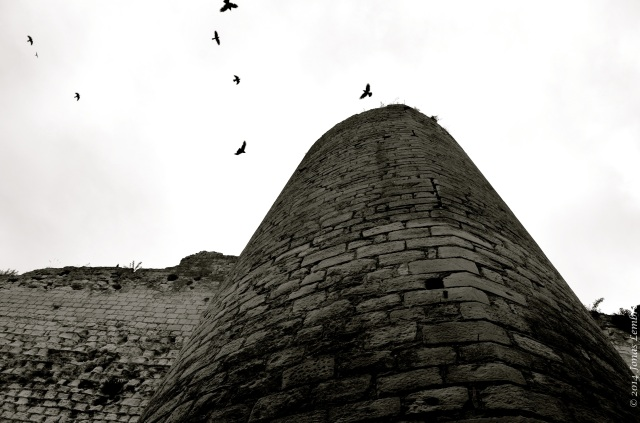 Crows around the tower, Loches