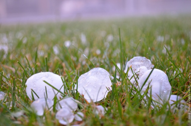 Hailstones in grass