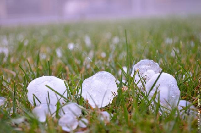 Hailstones in grass