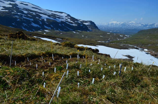 Fieldwork at 1000 meter elevation