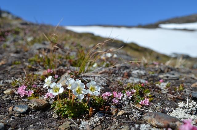The alpine spring