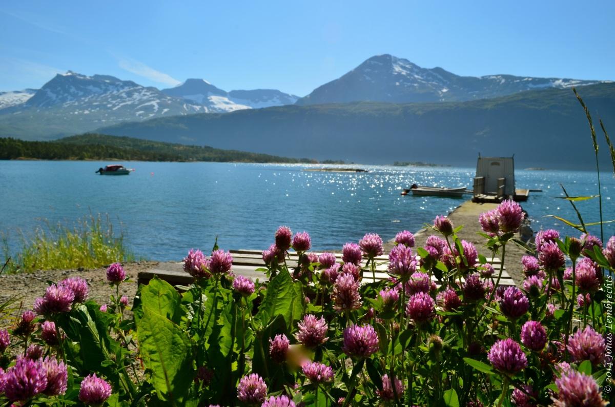 Fjord and fjäll