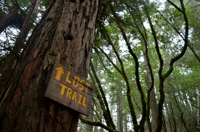 Lost trail in Muir Woods