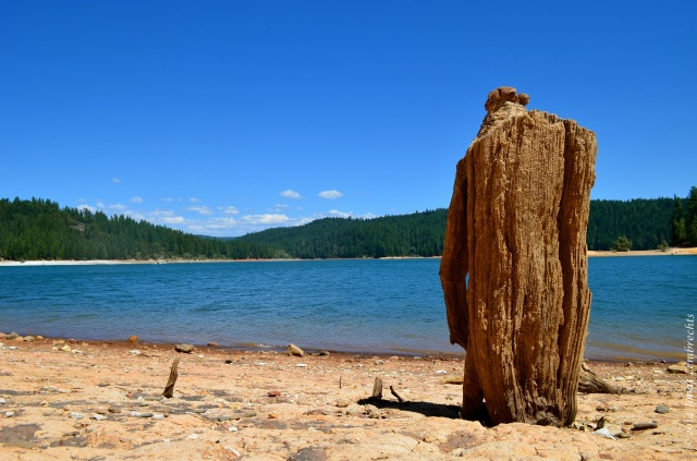 Drought and tree stump