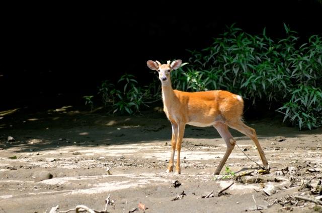Deer in the wildlife refuge