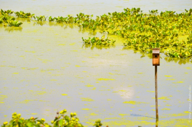 Bird house in marsh