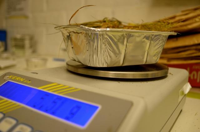 Weighing biomass