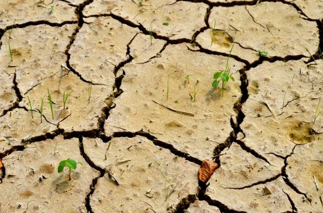 Dry Spanish soil