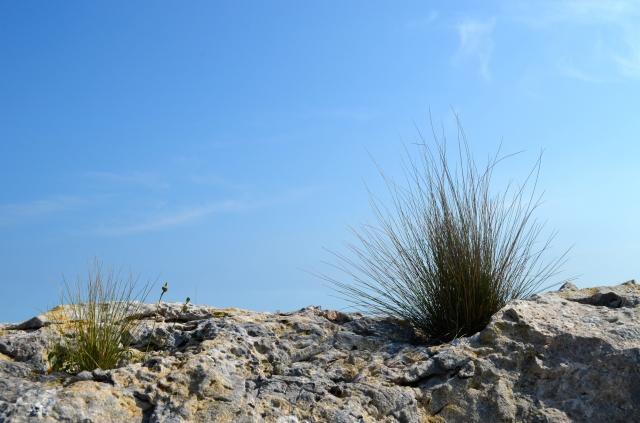 Dry mountain vegetation