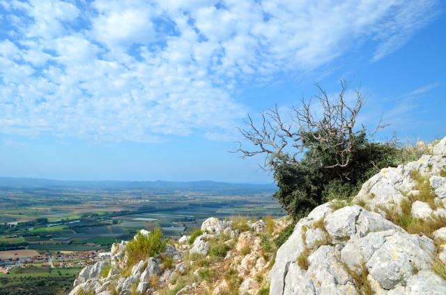 Mediterranean shrub on a mountain top