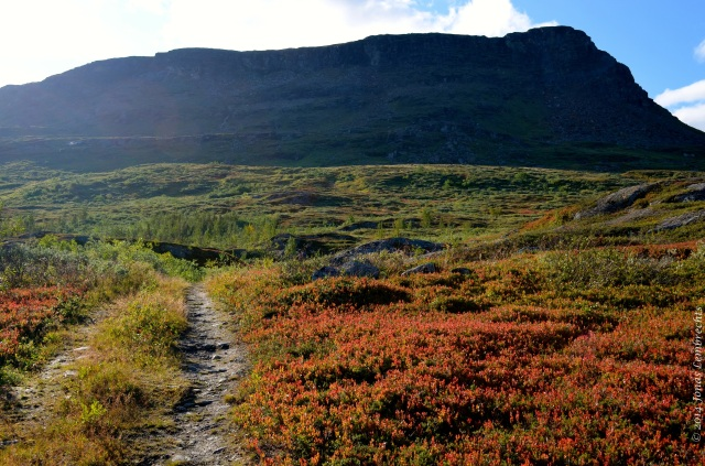 Hiking track through autumn tundra