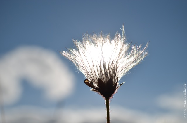Seeds against the sun