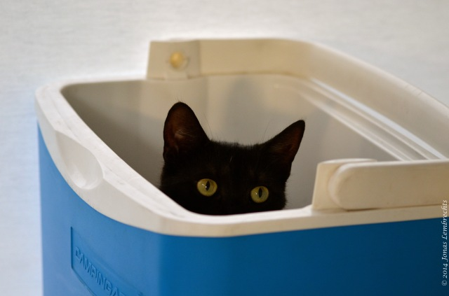 Black cat hiding in cooler