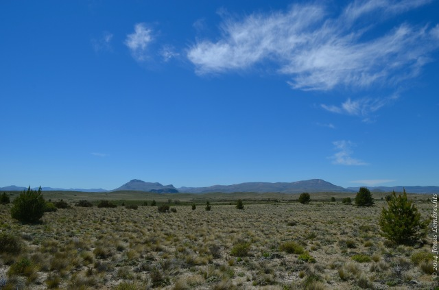 Steppe with pine encroachment