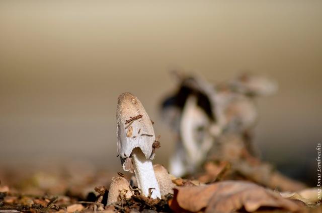 Brown mushroom in autumn