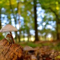 The mushroom mystery