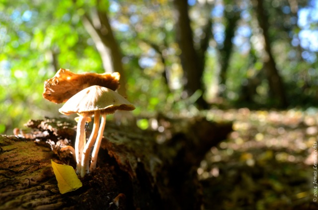 Fungi growing on dead tree