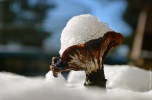 Mushroom with snowy hat