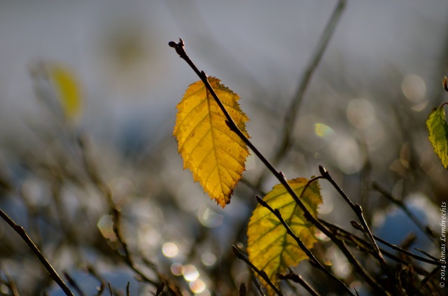 Autumn leaf in winter time
