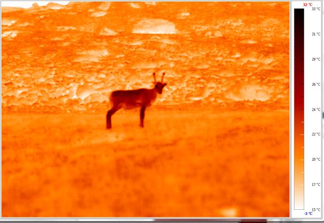 Thermal reindeer