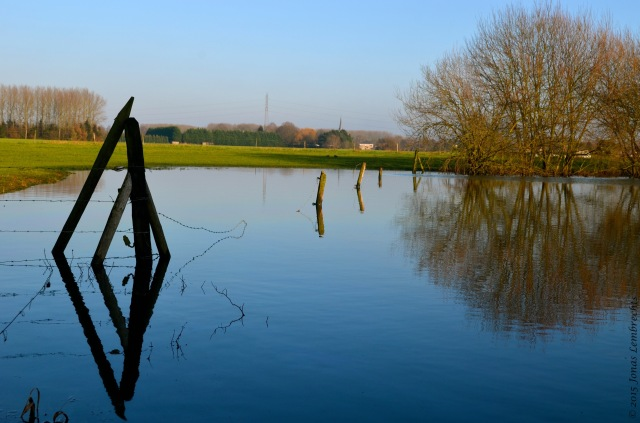 Fence in flooded meadow