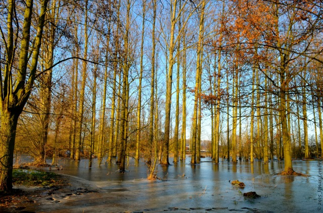 High water in forest