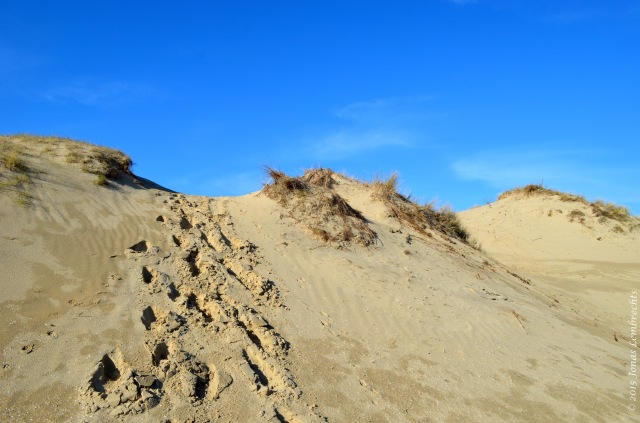 Dunes at the French Northsea coast