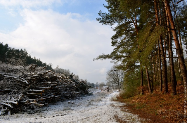 Microclimate in winter forest