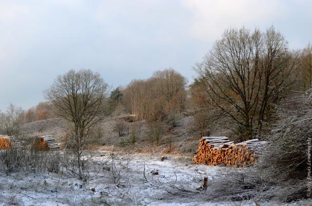 Wood harvest in Limburg in winter