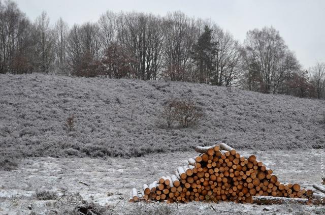 Wood harvest - National Park Hoge Kempen