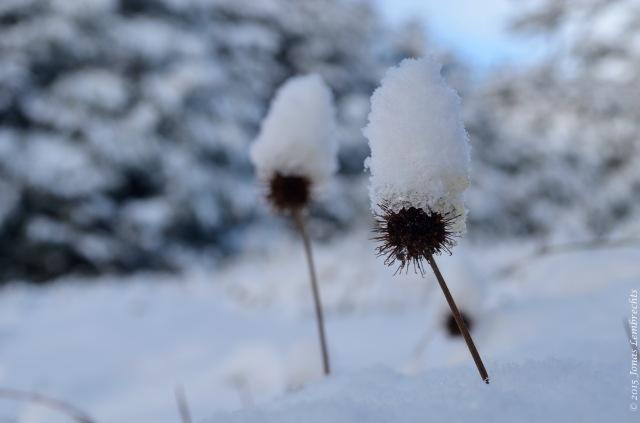 Snowy hats