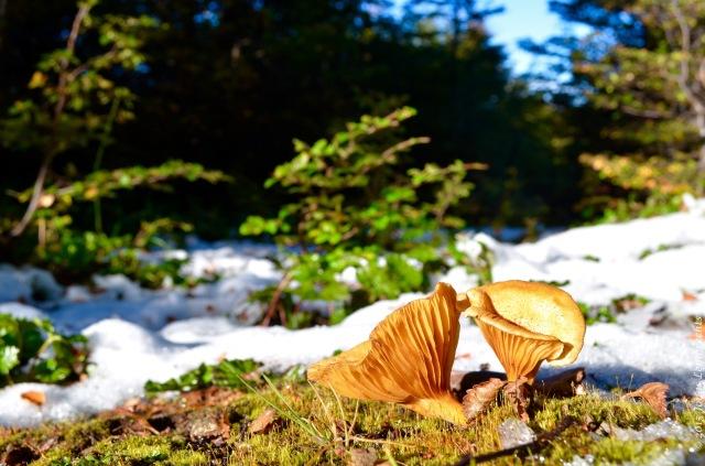 Mushroom in lenga forest