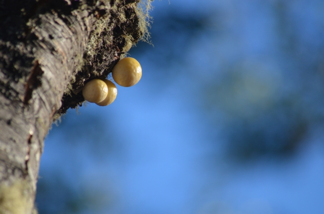 Nature's easter eggs, some mushrooms
