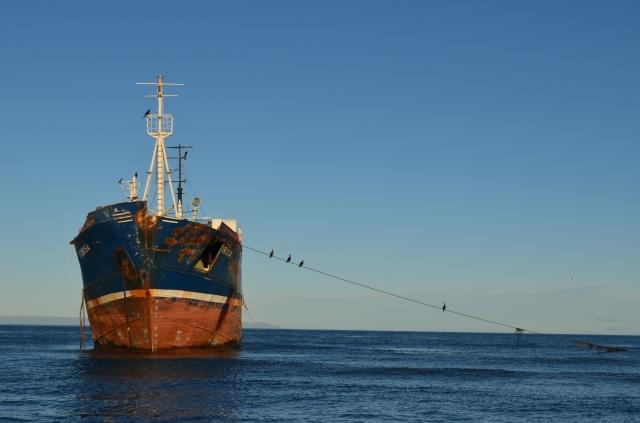 Cormorants on abandoned ship