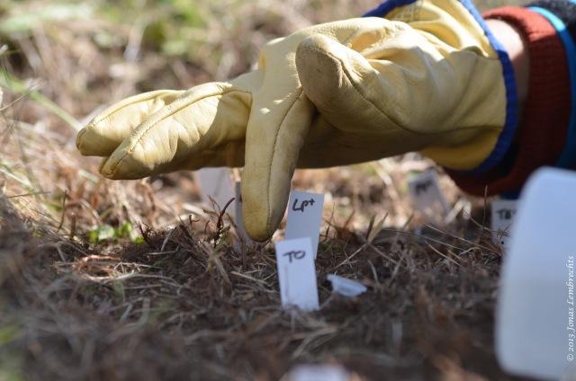 Scientific gardening in Chile