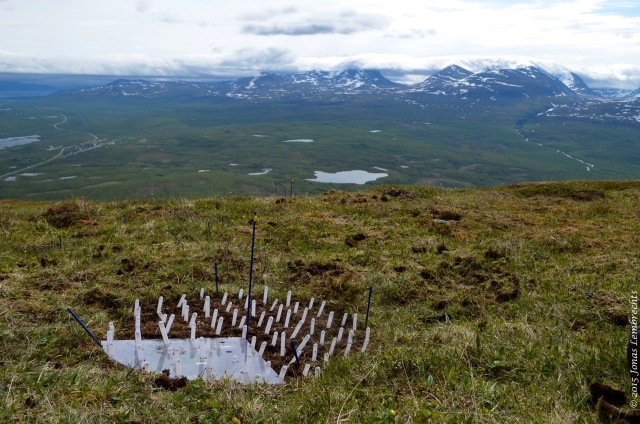 Experiment to unravel effects of disturbance on microclimate