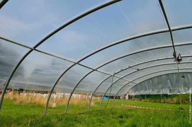 Ecological experiment in greenhouse