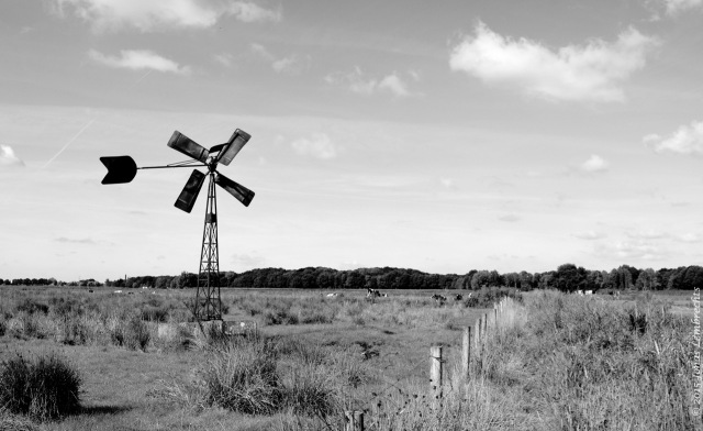 Wind mill in polders