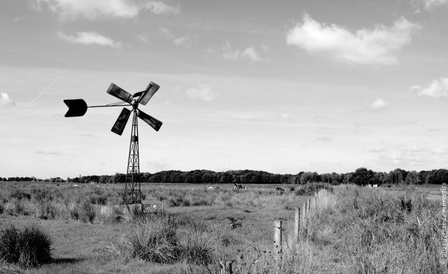 Wind mill in polders