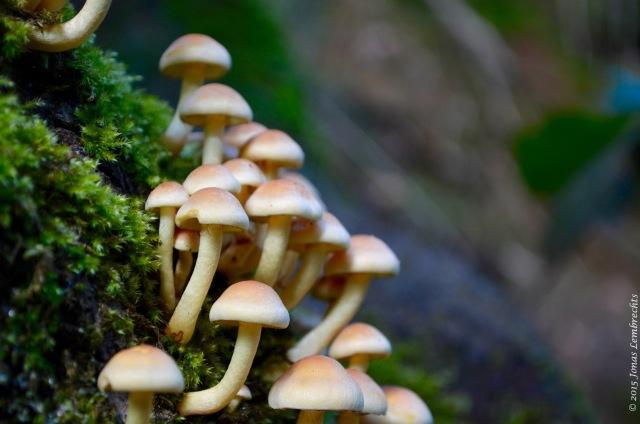 Mushrooms on a mossy tree stump